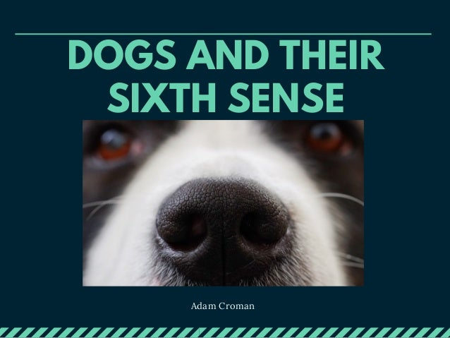 DOGS AND THEIR SIXTH SENSE Adam Croman