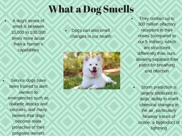 Dogs and their Sixth Sense  Slide 3