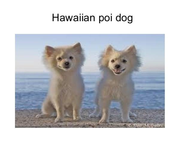 Poi Dogs Name