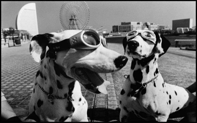 Dogs, By Photographer Elliott Erwitt Slide 2