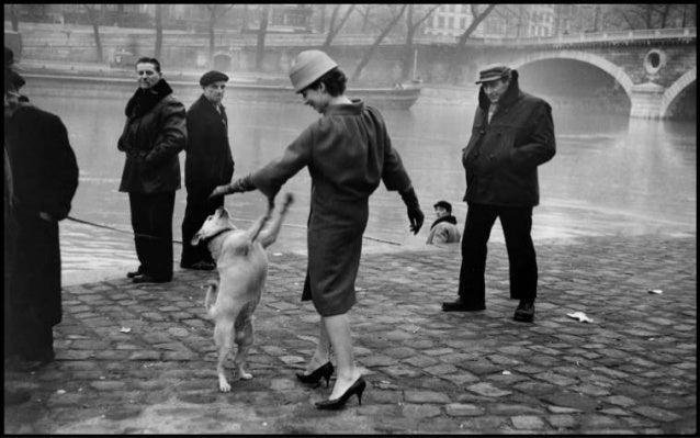 Dogs, By Photographer Elliott Erwitt Slide 3