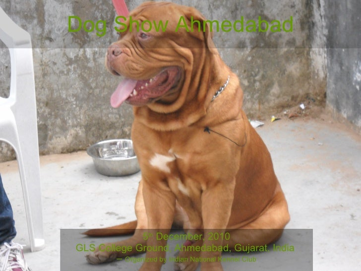 Dog Show Ahmedabad 5 th  December, 2010 GLS College Ground, Ahmedabad, Gujarat, India  –  Organized by Indian National Ken...