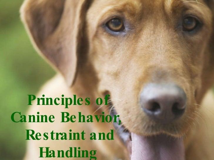 Principles of Canine Behavior,   Restraint and Handling