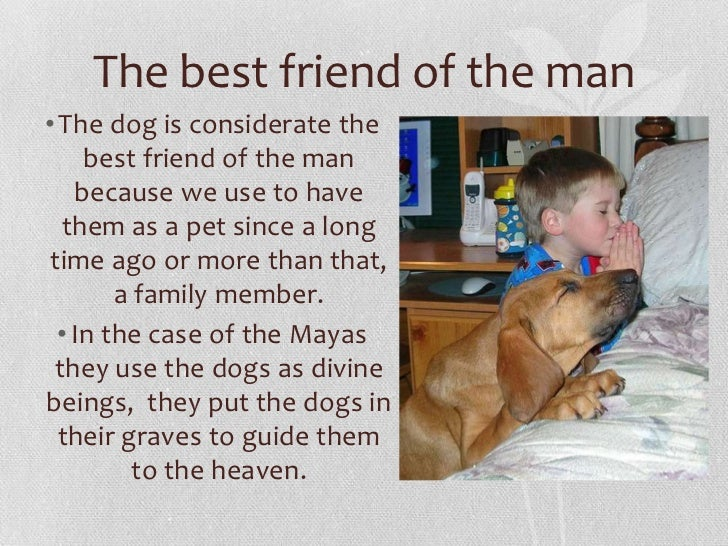 Best Small Family Dogs That Don