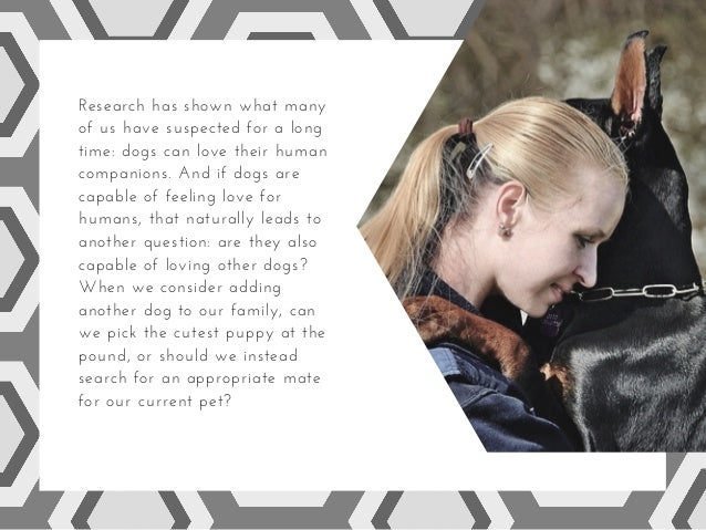 Dogs: the psychology of love and rejection Slide 2