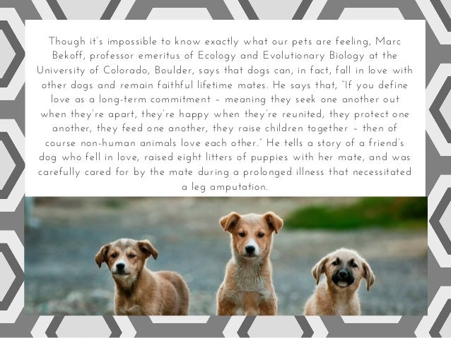 Dogs: the psychology of love and rejection Slide 3