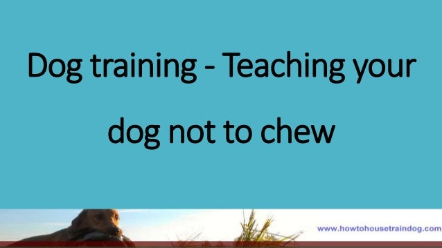 to chew or not to chew Home » bones – to chew or not to chew what a question by dr marilyn sthamann, cvh there has been much debate about the pros and cons of offering bones to our dogs and cats in the past, we have witnessed many dogs become quite ill after chewing on bones we advised against offering any bones to our pets.