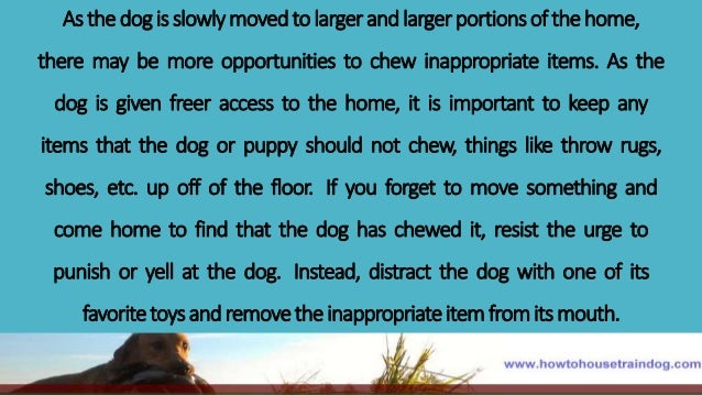 Training dog not to chew cords, stop dog barking remedies