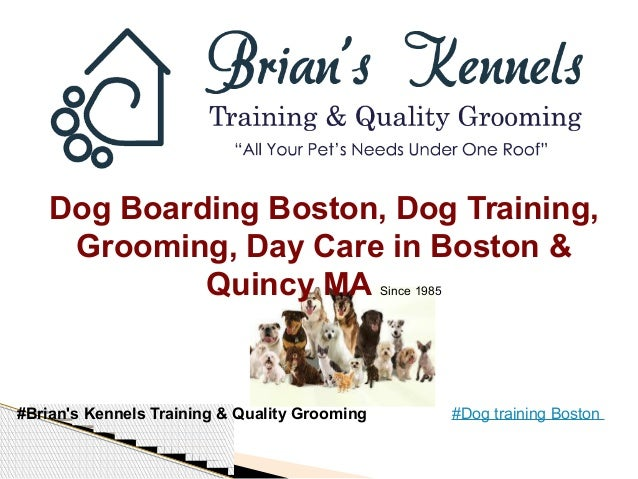 Dog training_boston