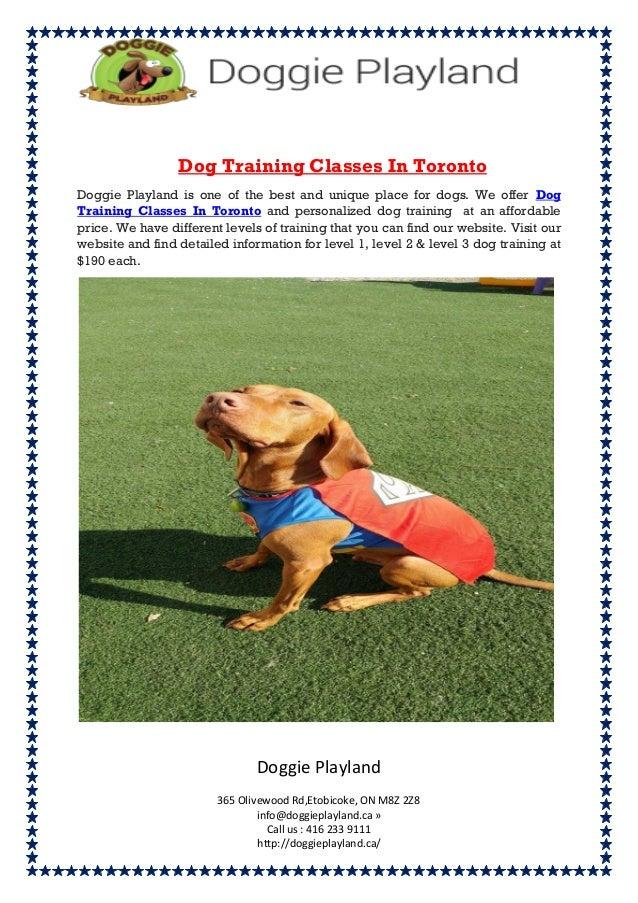 Dog training classes in toronto