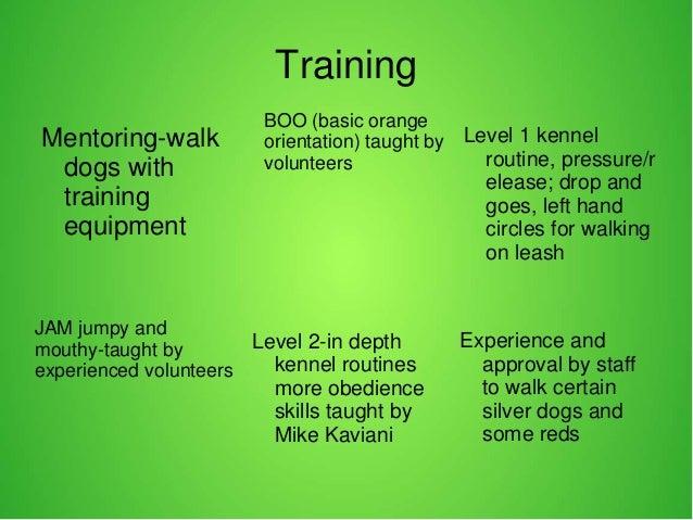 dog walking and volunteer engagement