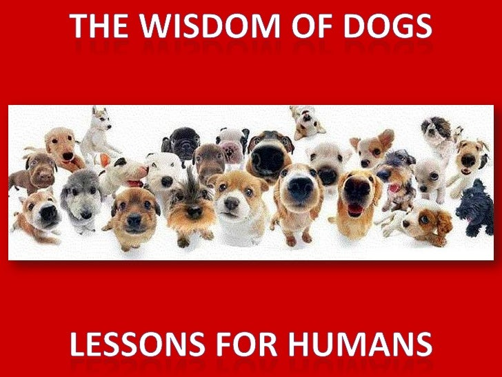 The wisdom of dogs<br />Lessons for humans<br />