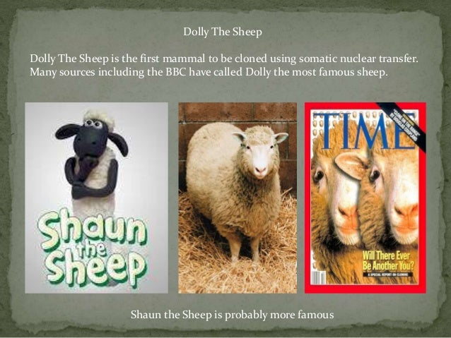 The Cloning Of Dolly The Sheep Presentation Slide 2