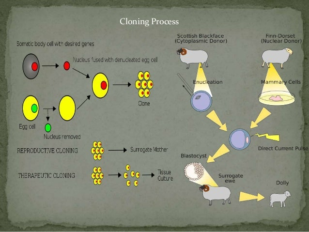 The Cloning Of Dolly The Sheep Presentation Slide 3