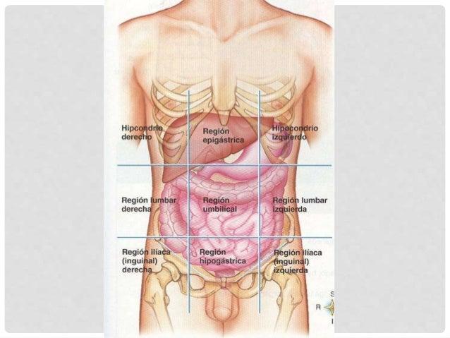 Los dolores vivos en los riñones al embarazo sobre los plazos avanzados que
