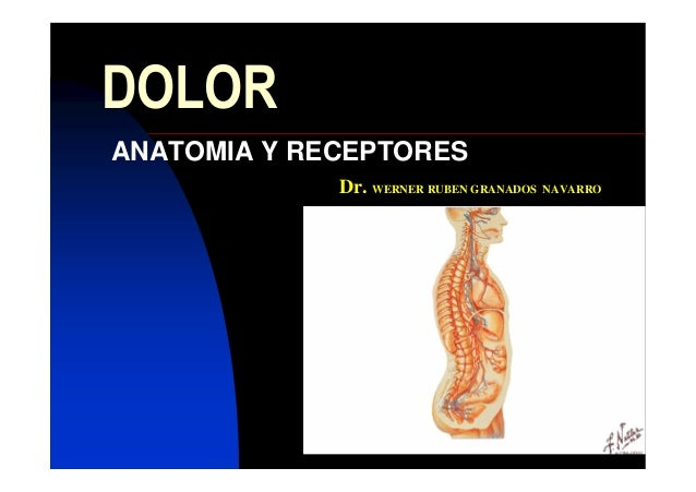 DOLOR ANATOMIA Y RECEPTORES Dr. WERNER RUBEN GRANADOS NAVARRO