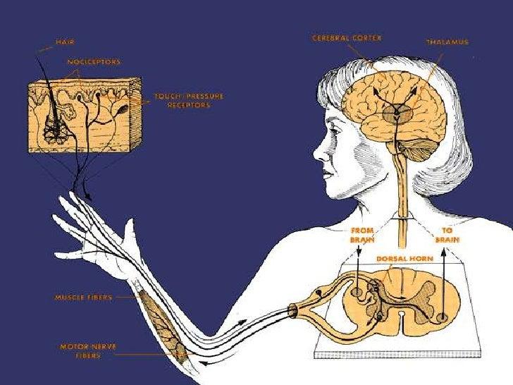 Dominar el camino de Dolor muscular pecho no es un accidente es un arte