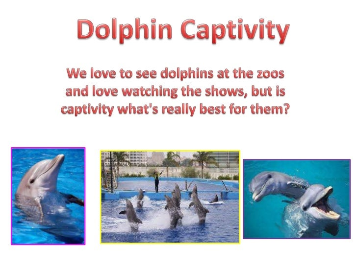 Dolphin Captivity<br />We love to see dolphins at the zoos and love watching the shows, but is captivity what's really bes...