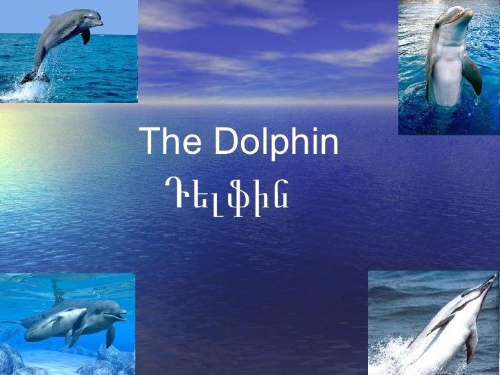 The Dolphin Դելֆին