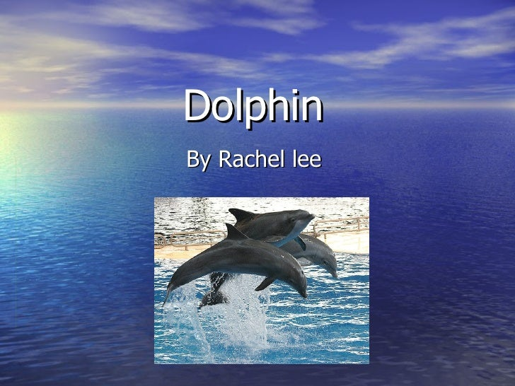 Dolphin By Rachel lee