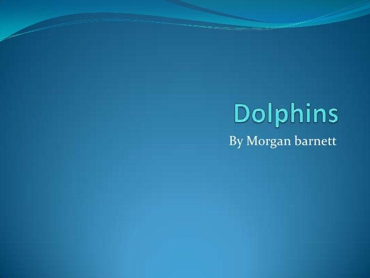 Dolphins<br />By Morgan barnett<br />
