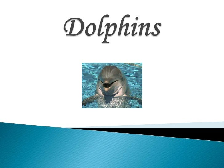 Dolphins<br />