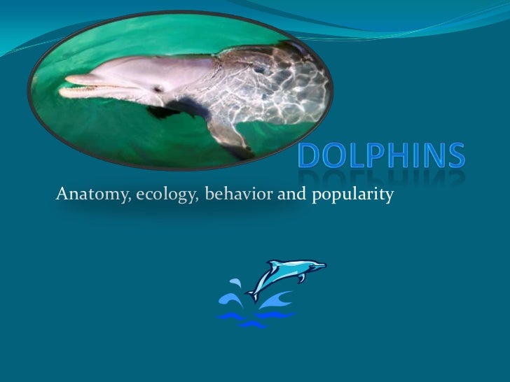 Dolphins <br />Anatomy, ecology, behavior and popularity<br />