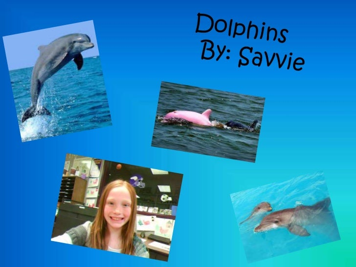 What Do Dolphins Look Like? Dolphins look gray; there are some species with blackstripes, spots or some black parts on the...