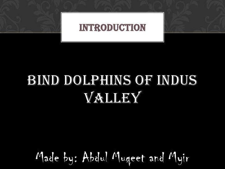 INTRODUCTIONBind dolphins of indus       valley Made by: Abdul Muqeet and Myir