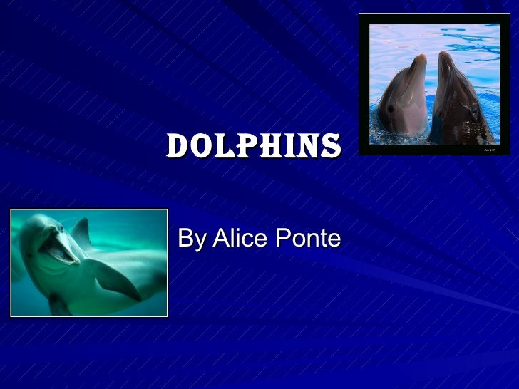 Dolphins By Alice Ponte