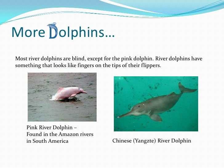 Evolution of Whales and Dolphins&nbspTerm Paper