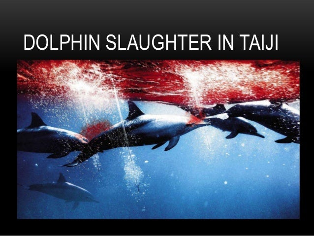 Taiji Facts/Frequently Asked Questions