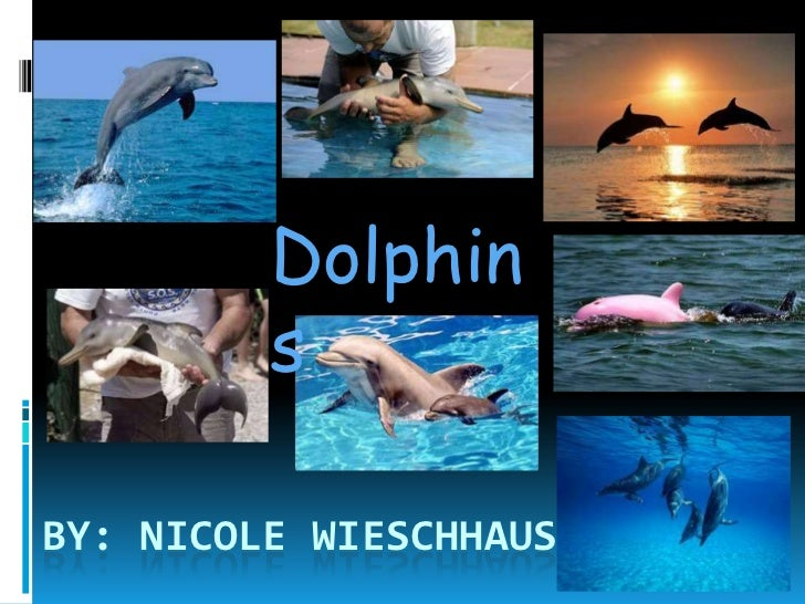 Dolphin             s  DolphinsBY: NICOLE WIESCHHAUS