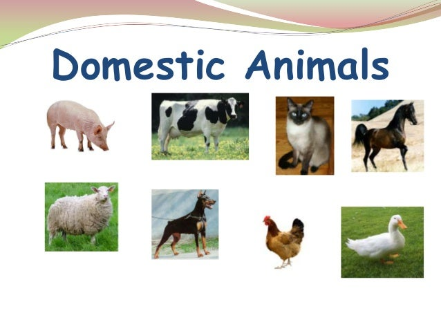 domestic animals information This encyclopedia britannica list features 6 domestic animals and their wild ancestors.