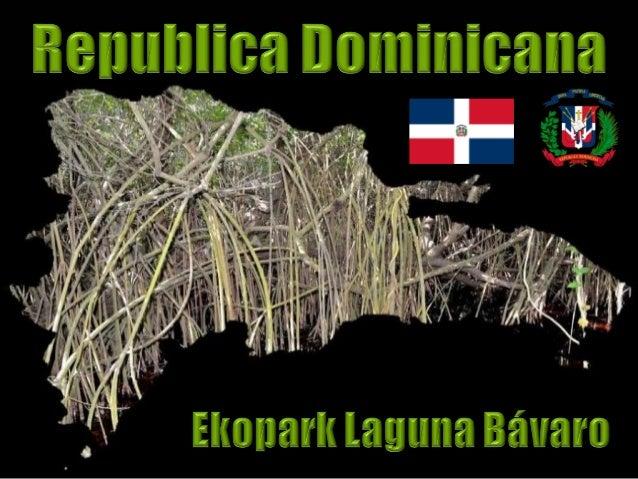 Mangrovy jsou společenstva ohrožených a chráněných stromů vyskytující se v brakických vodách (rozhraní mezi slanou a sladk...