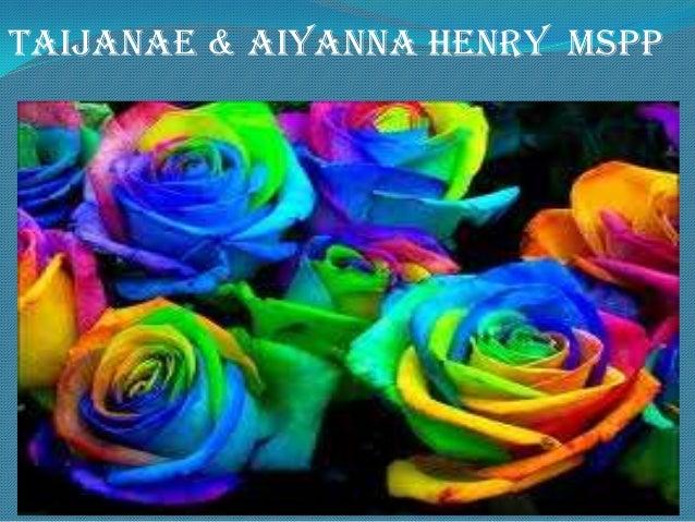 Taijanae & Aiyanna Henry MSPP