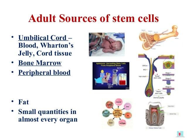 Adult Stem Cells Bone Marrow 56