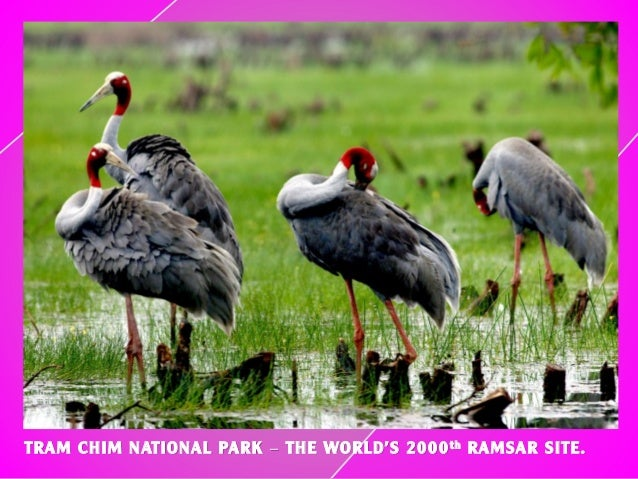 TRAM CHIM NATIONAL PARK – THE WORLD'S 2000th RAMSAR SITE.