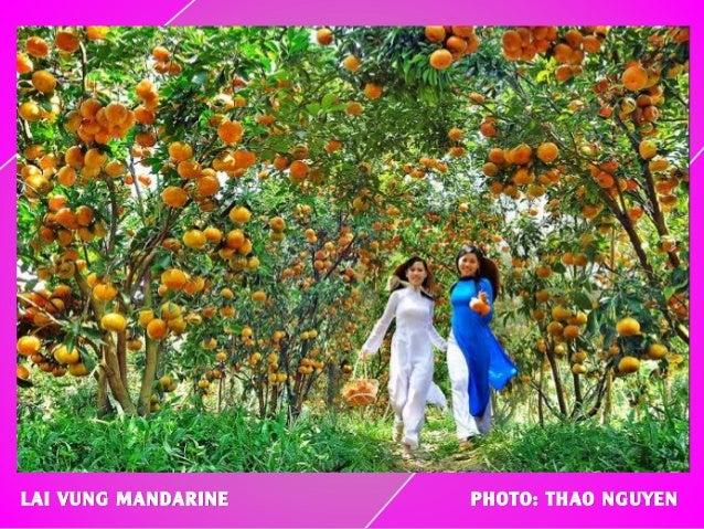 LAI VUNG MANDARINE PHOTO: THAO NGUYEN