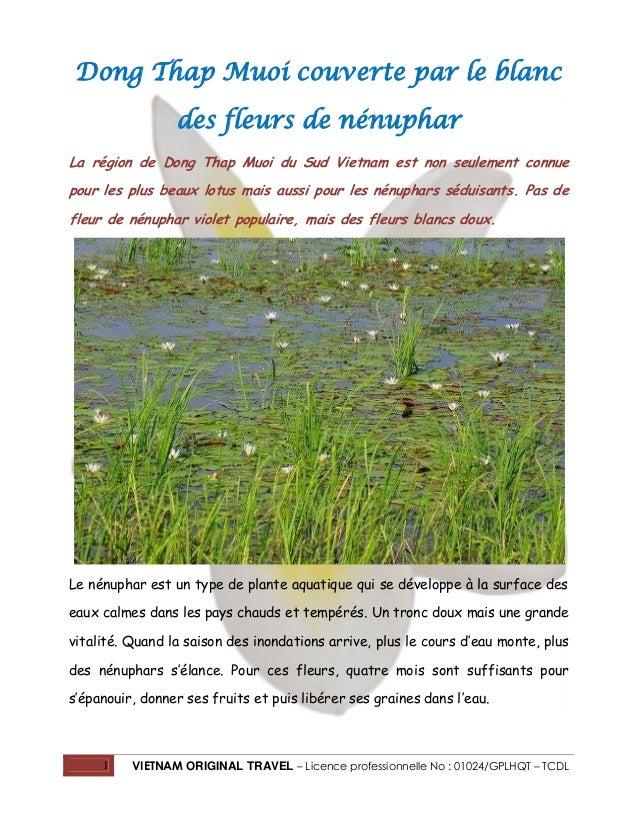 Dong Thap Muoi couverte par le blanc des fleurs de nénuphar La région de Dong Thap Muoi du Sud Vietnam est non seulement c...