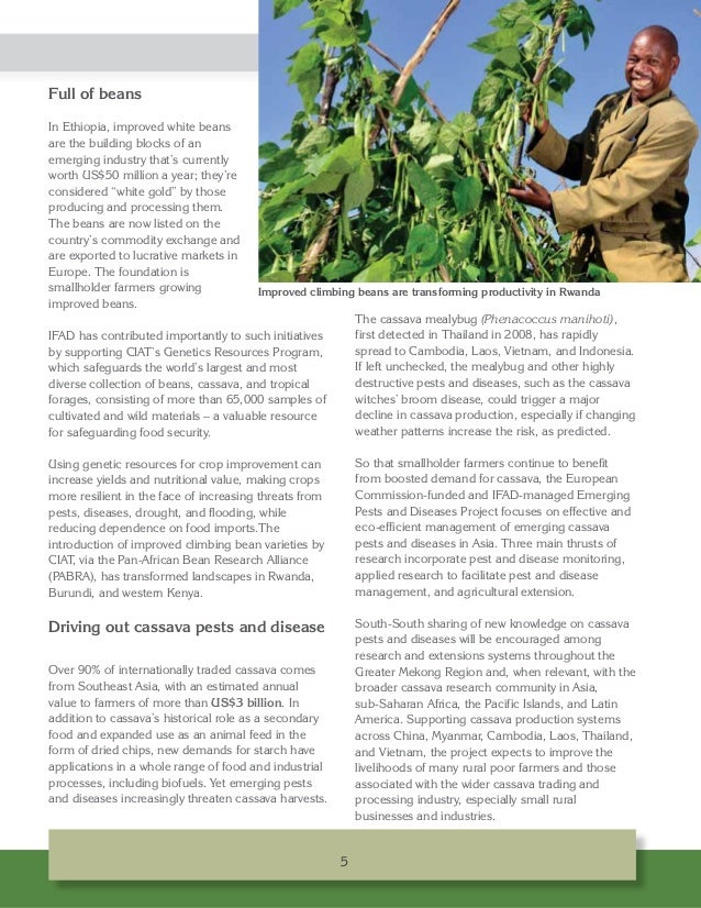 Full of beans In Ethiopia, improved white beans are the building blocks of an emerging industry that's currently worth US$...