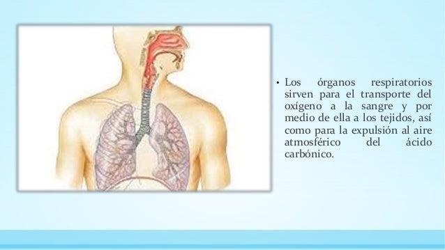 fisiologia del aparato respiratorio Slide 2