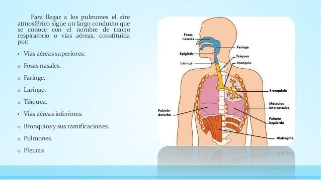 fisiologia del aparato respiratorio Slide 3