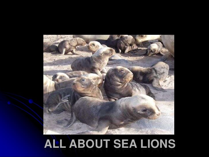All about sea lions<br />
