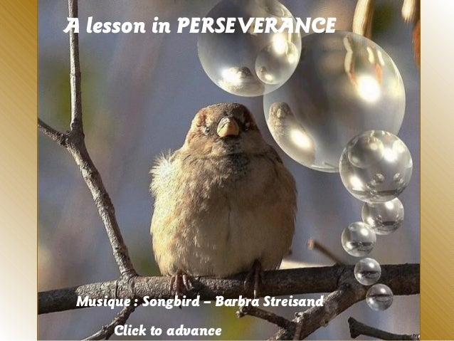 A lesson in PERSEVERANCEMusique : Songbird – Barbra StreisandClick to advance