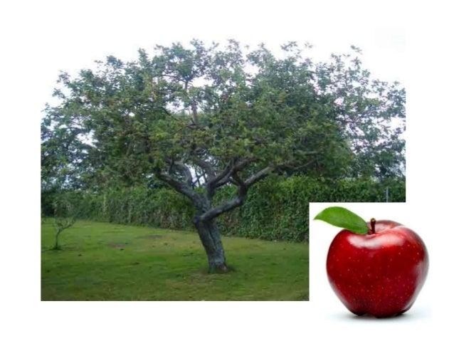 D'on venen les fruites sessió 2 thao pàrvuls