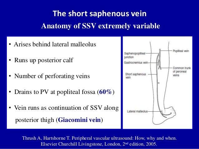 The short saphenous veinAnatomy of SSV extremely variableThrush A, Hartshorne T. Peripheral vascular ultrasound: How, why ...