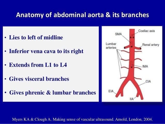 Vascular anatomy of lower limb