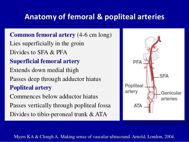 Peroneal artery anatomy