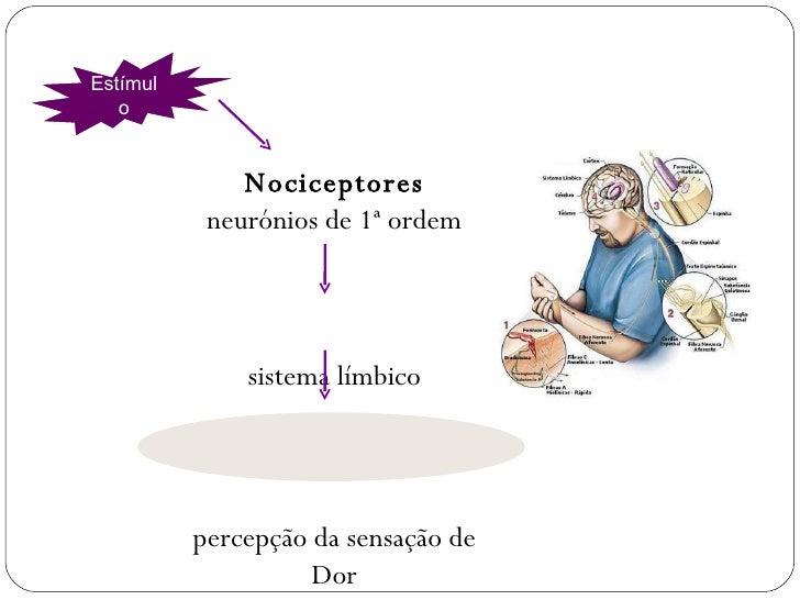 Nociceptores neurónios de 1ª ordem sistema límbico percepção da sensação de Dor Estímulo FISIOLOGIA DA DOR
